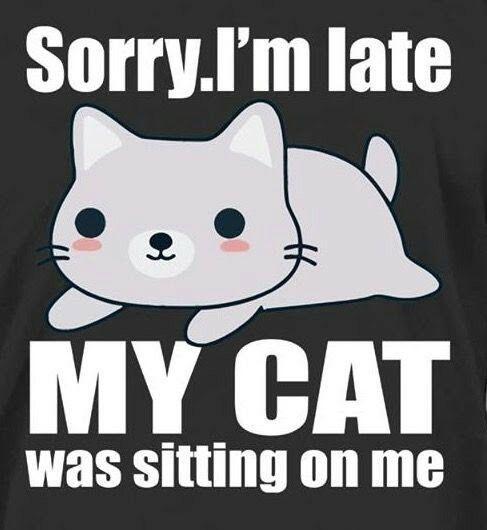 Only a true cat lover understands 'feline paralysis'.