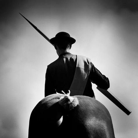 """""""Ring steken"""" A Zeeuwse folklore sport/game on a Dutch Heavy Draft horse."""