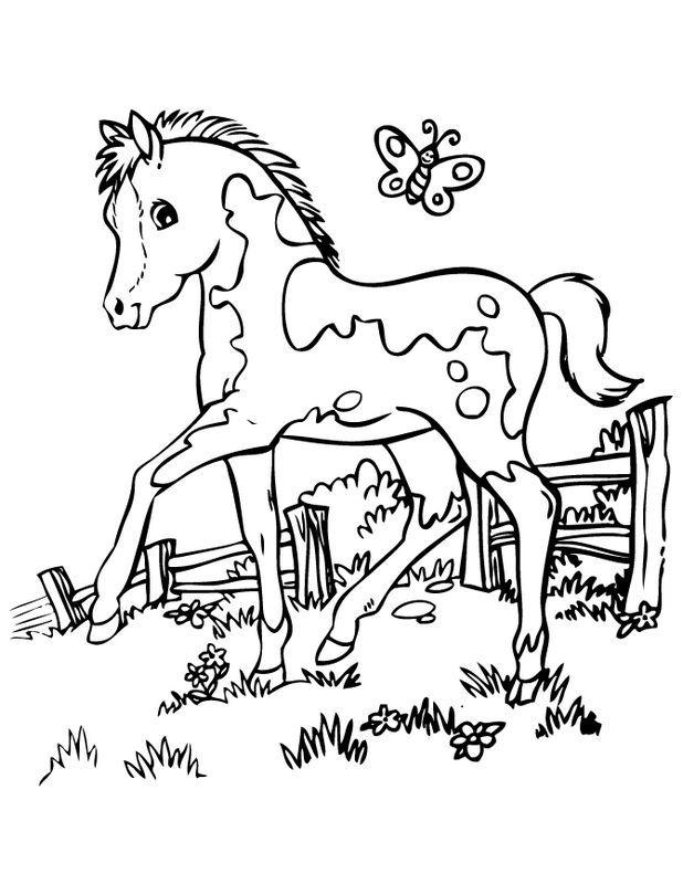 ausmalbild Kleine Fohlen mit einem Schmetterling   Horse ...
