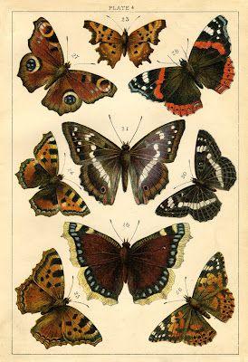 Instant Art Printable - Antique Butterflies and Moths // Future wall art