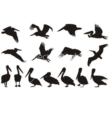Pelican+silhouettes+vector+262260+-+by+ard on VectorStock®