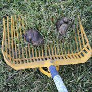 Dog Poop removed form grass