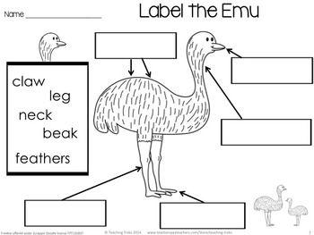 78 best Australian Animals Lesson Ideas images on