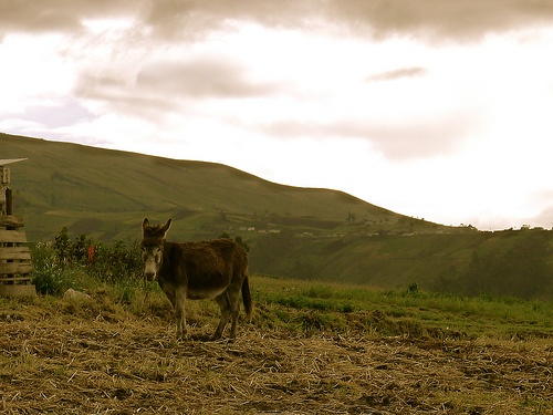 """Donkey in Apatug"" Student Photo on the Ecuador Project"