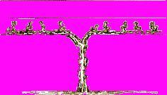 snoeimethoden en snoeiwijze van druiven. Wintersnoei, zomersnoei,