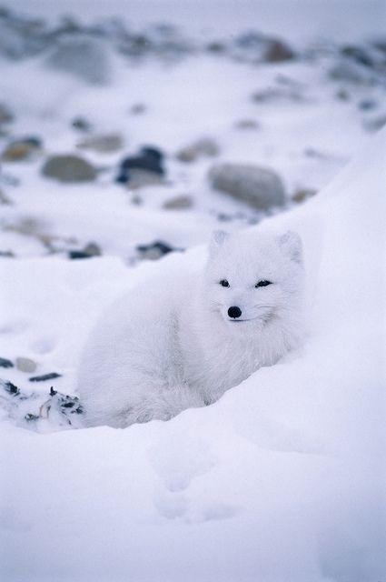 ☀Wildest Arctic by lwpkommunikacio