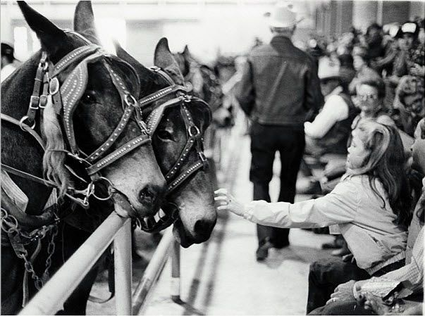 [Girl reaching out to mule, State Fair of Texas], 1984-1993, by Lynn   Lennon, held by SMU's DeGolyer Library. Courtesy: © Southern Methodist   University, Dallas, Texas (USA).
