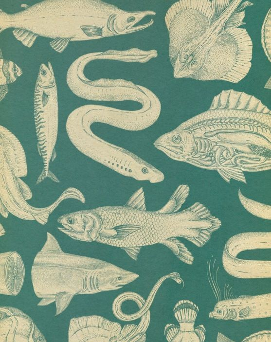 katie-scott:  fish pattern. more on this next year.