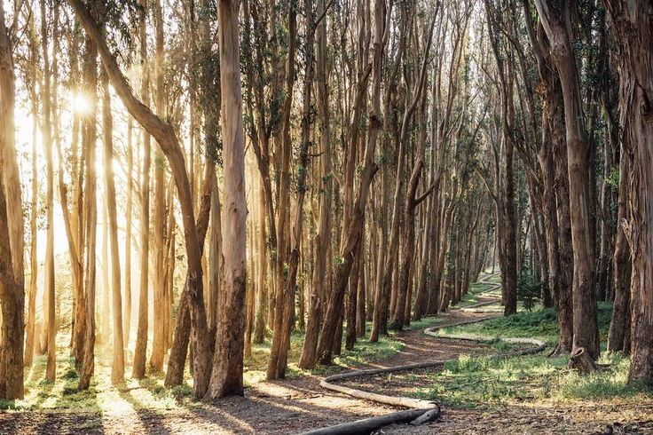 SFのおすすめスポット British artist Andy Goldsworthy installed a long, snaking track made of eucalyptus branches through a shady grove in the Presidio called Wood Line.