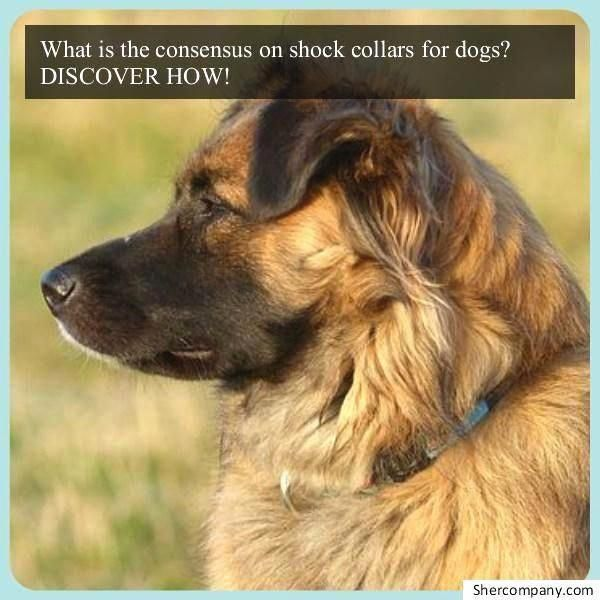 Most Important Dog Training Tip Become The Pack Leader With