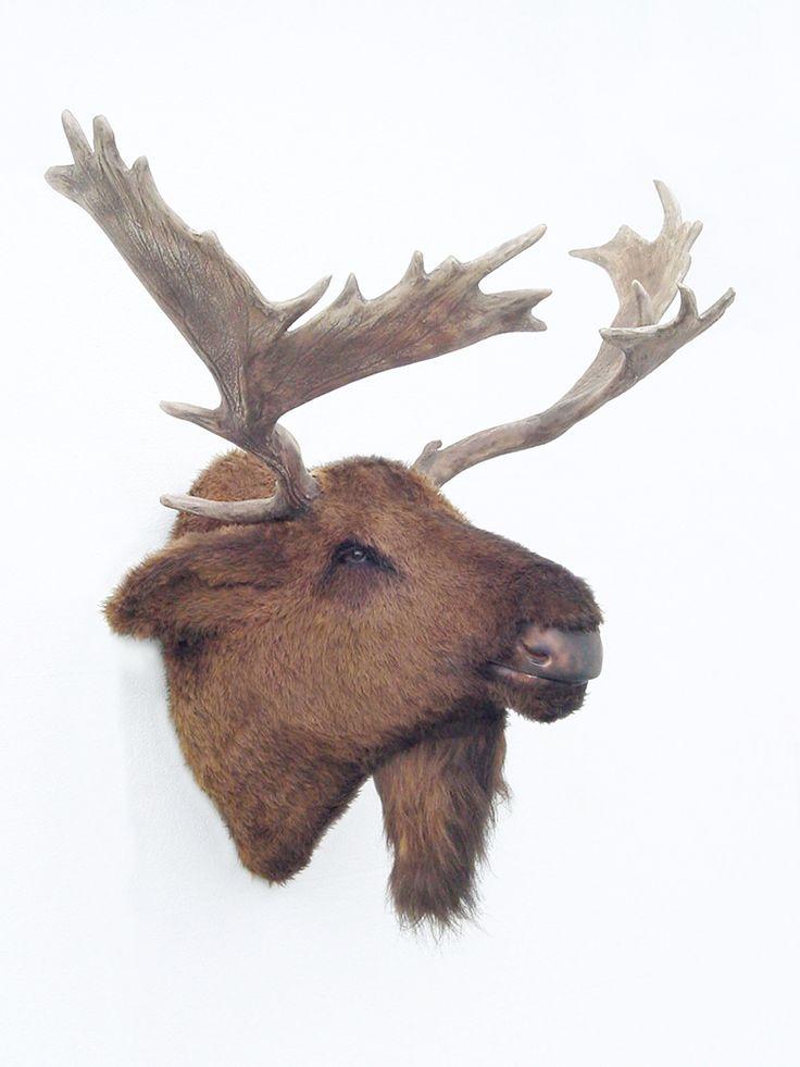 Moose Head Mount For The Home Moose Head Moose