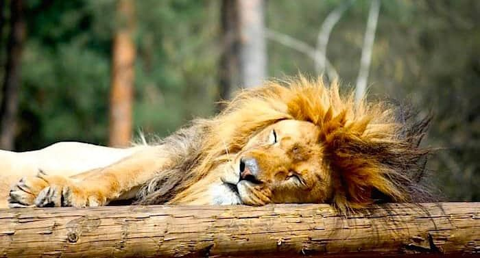 Der Safariland Gutschein Saison 2019 von Groupon bietet 31