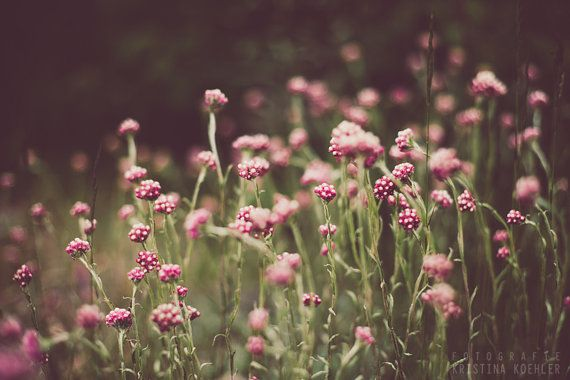 Signed photography print Meadow Flowers. Size 8x12 inches.    MEADOW FLOWERS: They sway slightly in the breeze, releasing the heat trapped