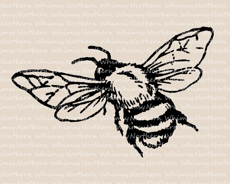 Bee Clip Art - Vintage Bumble Bee Image - Bee Illustration - Insect Clip Art - Bee Digital Stamp - Bee Graphic - Commercial Use OK by NorthernWhimsyImage on Etsy https://www.etsy.com/uk/listing/453145100/bee-clip-art-vintage-bumble-bee-image
