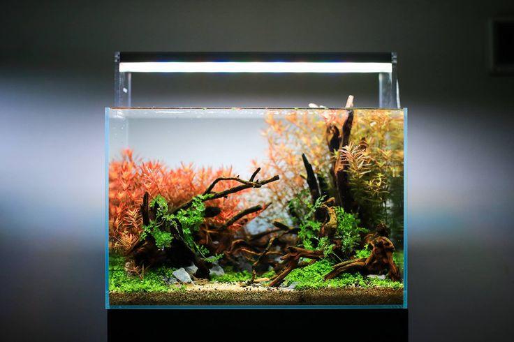 Best 25 nano aquarium ideas on pinterest betta tank - Petit aquarium design ...