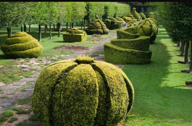 die besten 25 englischer bonsai buchsbaum ideen auf pinterest zwerg buchsbaum buxus. Black Bedroom Furniture Sets. Home Design Ideas