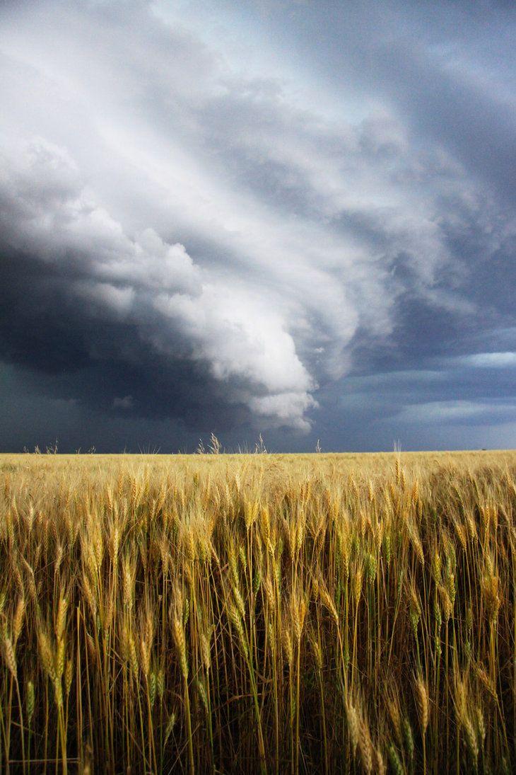 Storm on a Wheat Field by ~mfunston