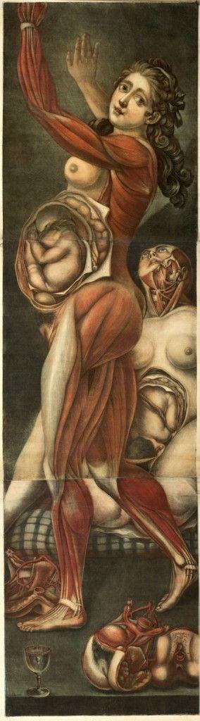 Jacques Fabien Gautier d'Agoty, Femme enceinte avec foetus visible. Droits : © BIUM, Paris / Photographe : Caussimon