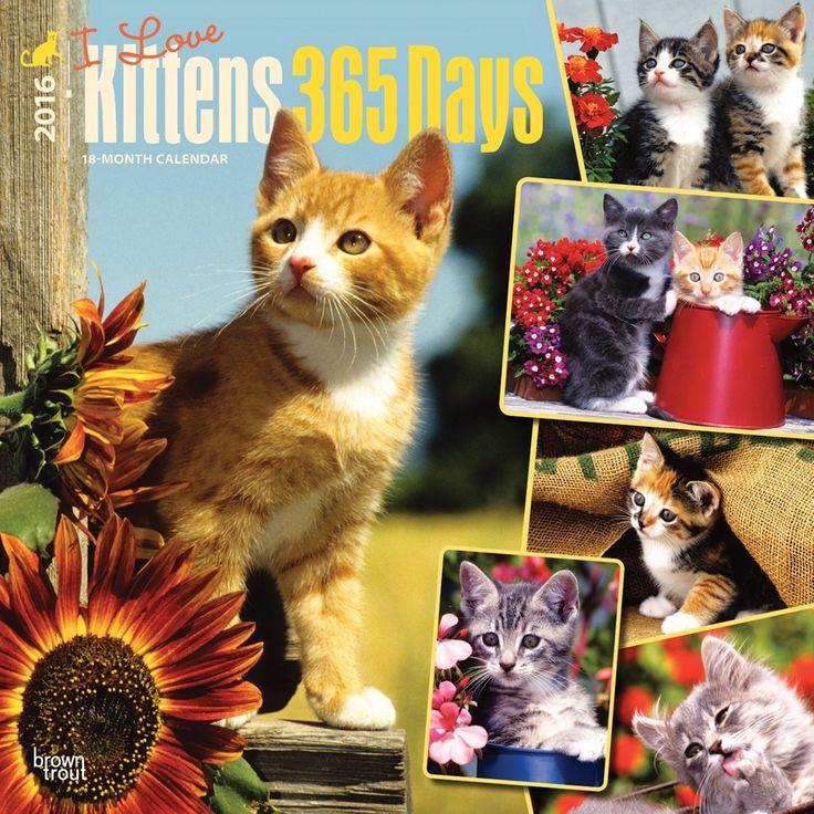 i love kittens 365 days calendar 2016