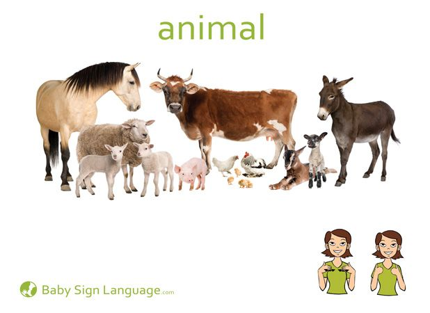 It's just a picture of Nerdy Asl Animal Signs Printable