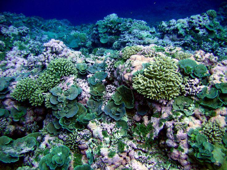 86 best Marine Biologist project ideas images on Pinterest - marine biologist job description
