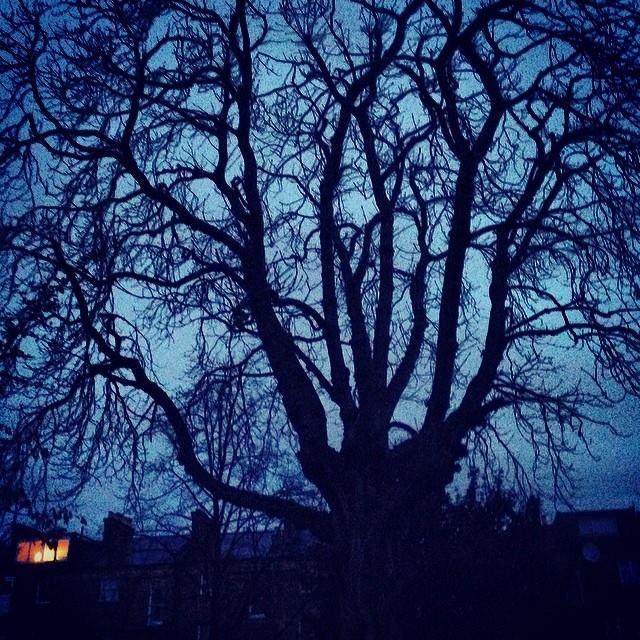 #treeoflaxmi lights at dawn. Feb 10. 2014