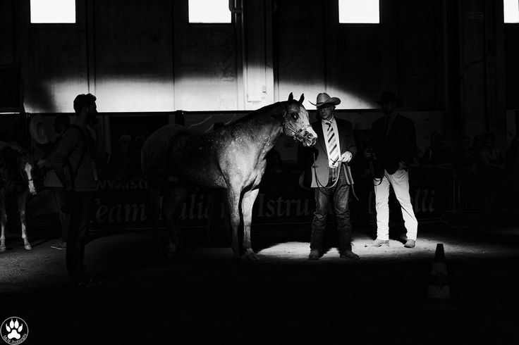Waiting - Waiting for the exhibition @ Fiera Cavalli Verona. _______ Appaloosa…