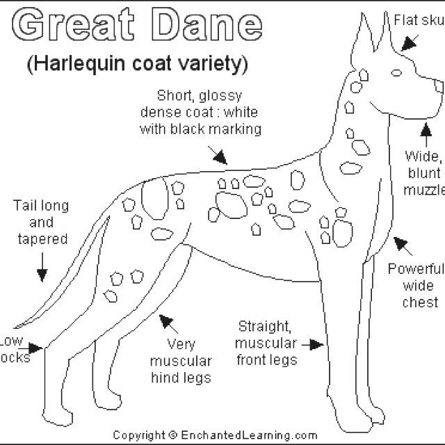 30 best images about great dane on pinterest harlequin for Great dane coloring pages