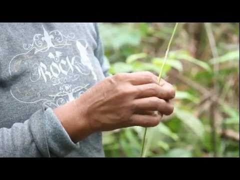 El Origen del Pueblo Tikuna. - YouTube