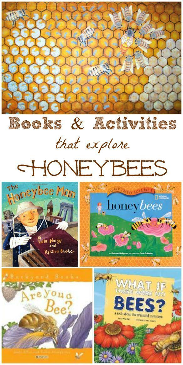 Lots of fun facts, books & activities that teach kids about honeybees!  Great for an insect unit or nature study