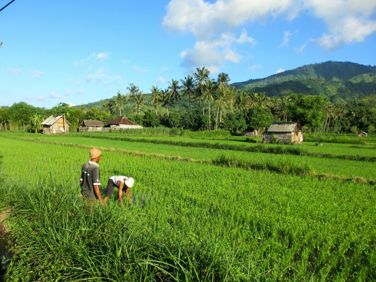 Le nord (est) de Bali: Tulamben et Amed