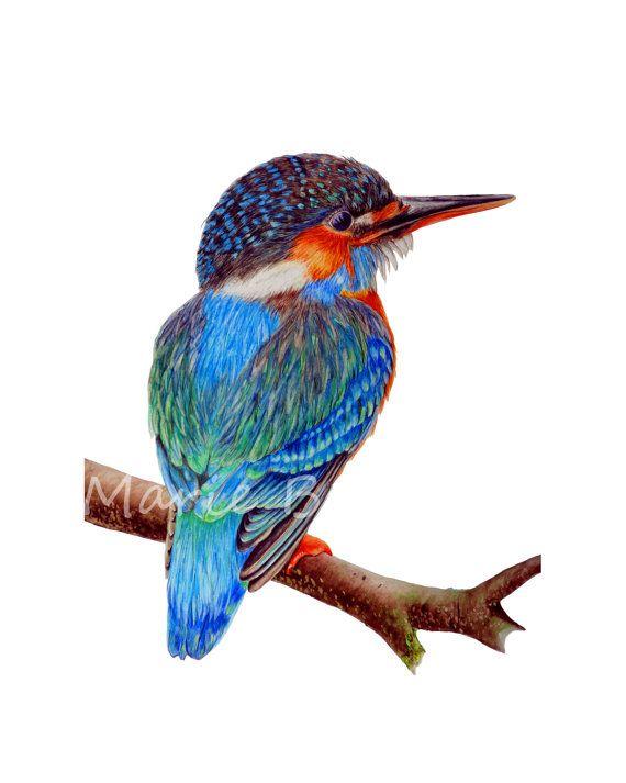 Kingfisher  large fine art print 16 x 11 in. Bird by marieburke1, $38.00