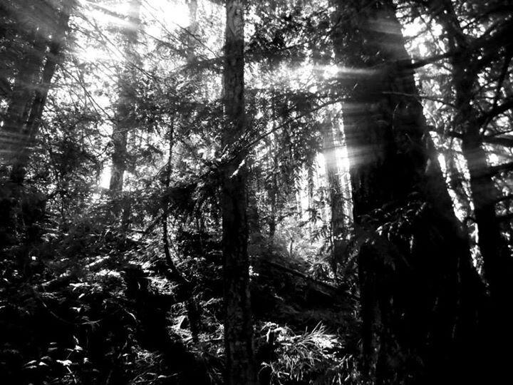 Forest streaks