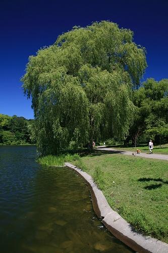 toronto-parks/high-park/grenadier-pond-high-park.