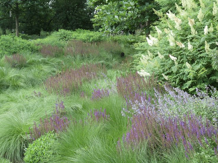 Sometimes too much color can be a distraction.  In this part of the garden  the brushstrokes of purple are highlighted by the soft texture of Sporobolus heterolepis.