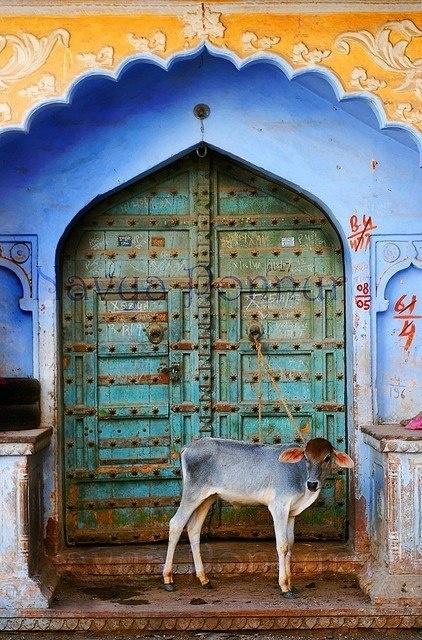 Blue door in Pushkar, Rajasthan, India - Photo by slokaa - https://www.flickr.com/photos/slokaa/4010671124/in/album-72157621637886575/
