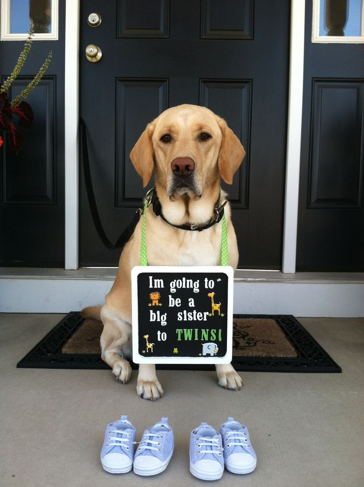 154 best images about Baby announcements with dog on ...