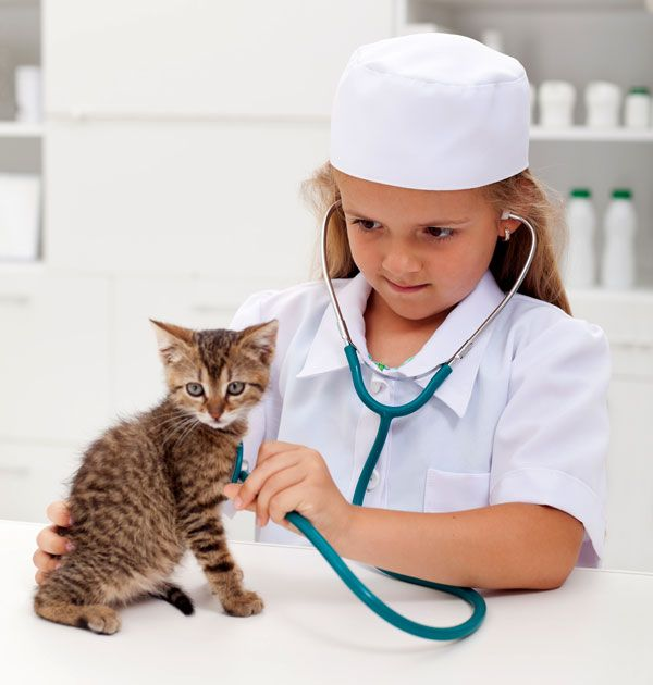286 best Veterinary Careers images on Pinterest Career quiz - veterinarian job description