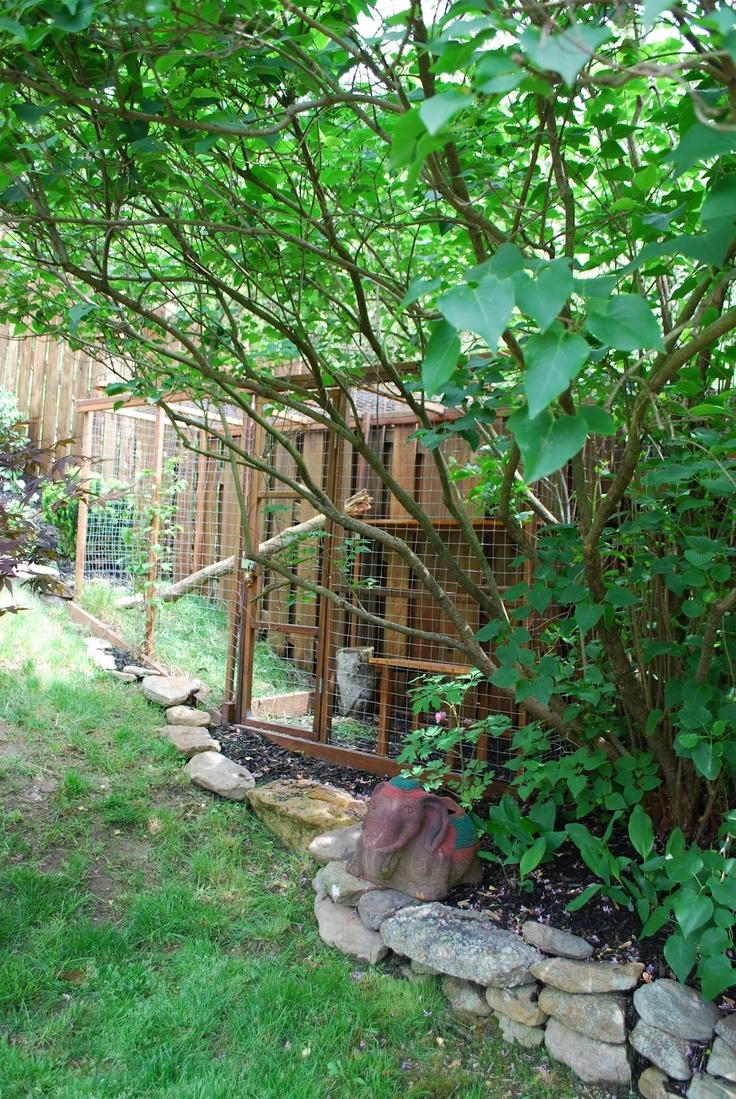 Diy Outdoor Cat Enclosures Crazy Pet People Pinterest