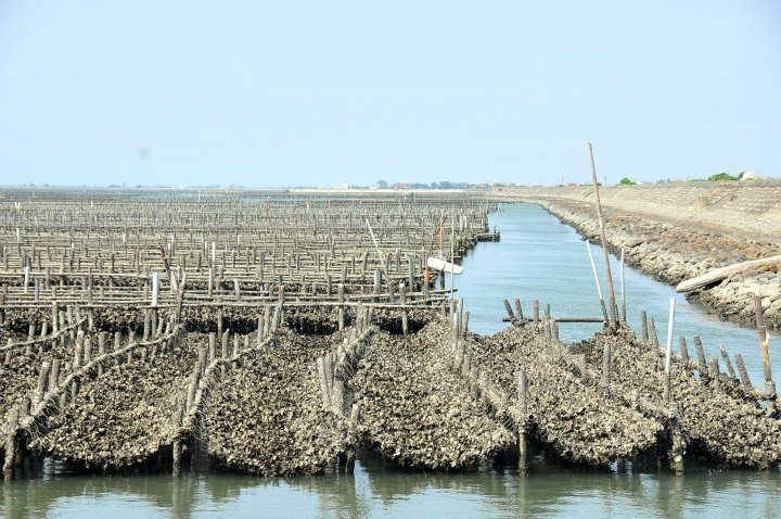 Oyster farmer battles federal government's order to shuck operation