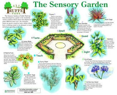 20 best sensory garden images on pinterest ideas for Sensory garden designs