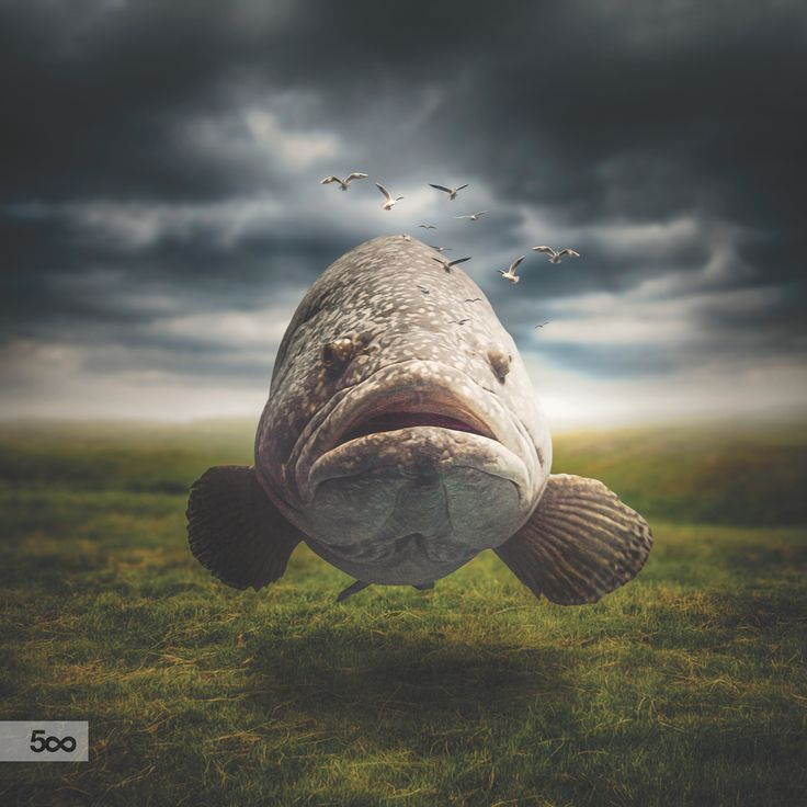 Swim In The Air by Lapanlima on 500px