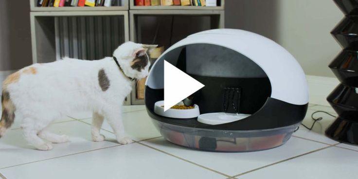 Nourrir son chat à distance? Voilà quelque chose qui devrait être bientôt possible. Une startup toulousaine du nom de Catspad a élaboré un distributeur de croquettes et d'eau intelligent.   Sur son smartphone, le(la) propriétaire programme la quantité de nourriture journalière et active l'approvis