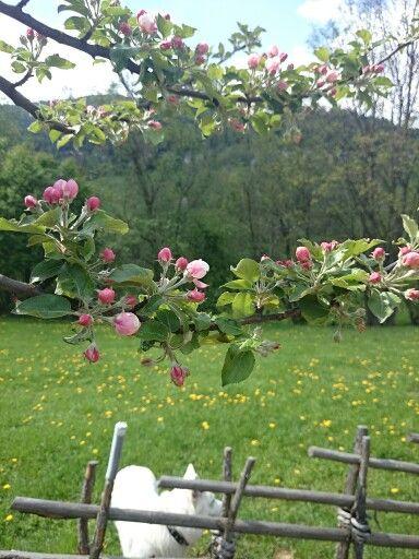 Frühling in den Nockbergen - rund ums Genuss-Hotel Almrausch**** wird es immer bunter ;) www.almrausch.co.at