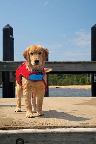 An excellent guide to selecting the right life jacket for your dog. www.calcuttboats.com