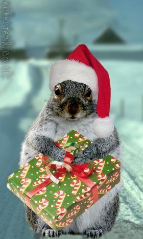 festive squirrel...
