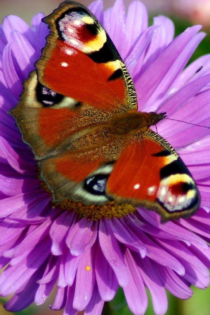 723 best butterflies u0026 flowers images on pinterest flowers