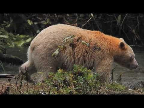 Enter the Great Bear Rainforest