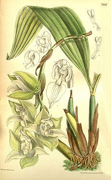 11 best flora fauna logo images on pinterest plants botanical trevoria is a genus of orchids native to southeastern central america and northwestern south america fandeluxe Gallery