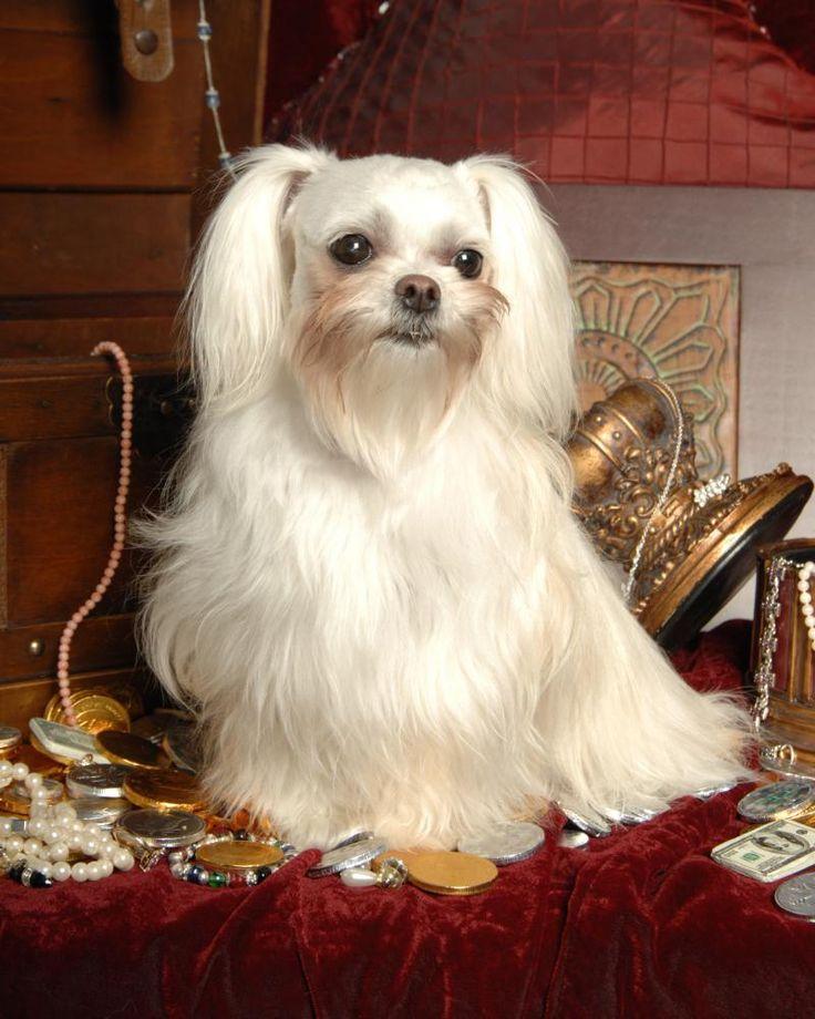 Mi Ki Dog Adoption